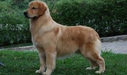 Felix-10 meses-1