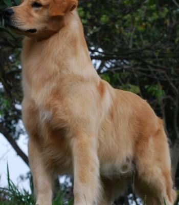 Felix-10 meses-3-capa